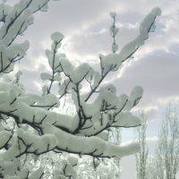 зимнее утро :: георгий  петькун