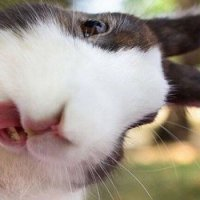 Кролик :: Танюша
