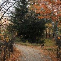 Животные в поселении. :: Наталья Золотых-Сибирская