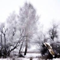 Январские картины. :: Михаил Столяров