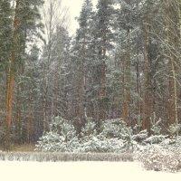 Снегопад :: Валентина Жукова