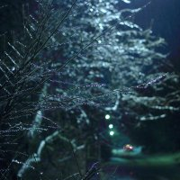 ...и дождь, и мороз. :: Юрий Гайворонский