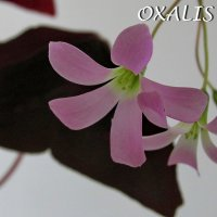 Зимний сад :: OLLES