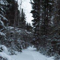 зимний лес :: sayany0567@bk.ru