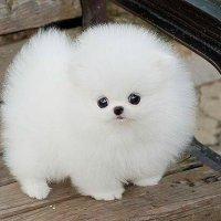 Собачка :: Танюша