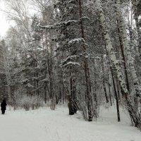 Скандинавская ходьба в морозный день ... :: Татьяна Котельникова