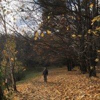 Осенняя дорожка :: Ekaterina Podolina