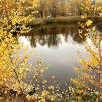 Золотая осень. :: Валентина Гундарева