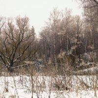 Зимнее пространство :: sorovey Sol