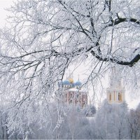 Морозный день... :: Лена L.