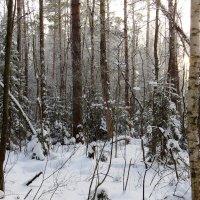 Зимний лес :: -Галина -