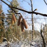 Зимний лес. Но скоро весна. :: -Галина -