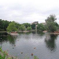 В московском зоопарке. :: Владимир Драгунский