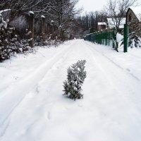 Зимнии зарисовки ..... :: Aleks Ben Israel