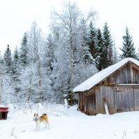 Зима :: Сергей Смирнов