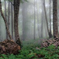 Утренний лес. :: Александр Криулин