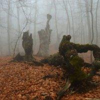 Утро в буковом лесу :: Тамара