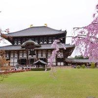 Храм Тодай-дзи и сакура. Нара Япония :: Swetlana V