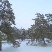 Зимний вальс... :: Тамара (st.tamara)