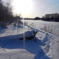 зима-холода :: Владимир Суязов