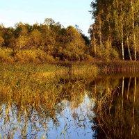 Осень. Закат. :: Нина Бурченкова.