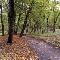 Парк Монрепо. :: Лариса (Phinikia) Двойникова