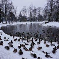 В парке :: Александр Михайлов