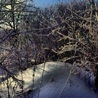 Синие тени ложатся на снег... :: Елена Строганова