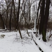 Нормальная московская зима :: Андрей Лукьянов