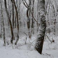 Зима в парке :: Сергей