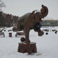Слон с мячами :: Александр Буянов