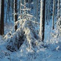 После снегопада :: Swetlana V