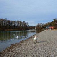 На озере...конец января... :: Galina Dzubina