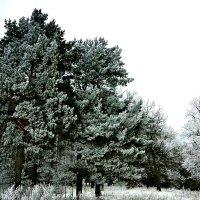 Зимний лес у дороги. :: Михаил Столяров