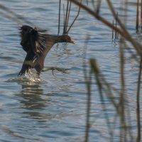 Танец на воде :: Павел Руденко