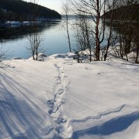 Белым снегом... :: Ольга