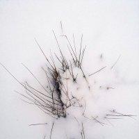 Трава под снегом :: Татьяна Королёва