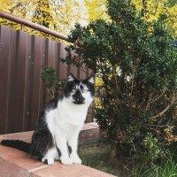 Осенний кот :: Андрэ Абраамов