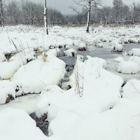 Тут зимуют бобры! :: Владимир Шошин
