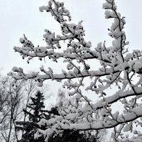 Всё в снег оделось! Сегодня был снегопад! :: Татьяна Помогалова