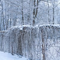 Зима седая. :: Senior Веселков Петр