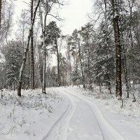 По лесной дороге с камерой :: Милешкин Владимир Алексеевич