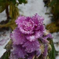 Зимние цветы :: Наталия П