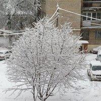 Зима.Есть) :: Борис Хантер