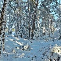 Снежное царство :: Swetlana V