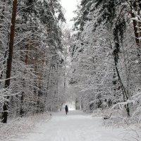 Снежный тоннель :: Надежда Бахолдина