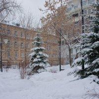 После снежной ночи... :: марк