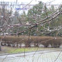 После дождя :: Анастасия Фомина