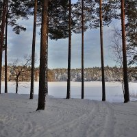 Зимний день :: Swetlana V