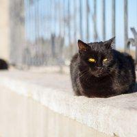 Коты ждут весны :: Николай Осипенко